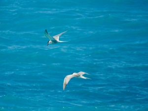 Common terns photographed in December at almost exactly the spot where the truck stopped on Thursday