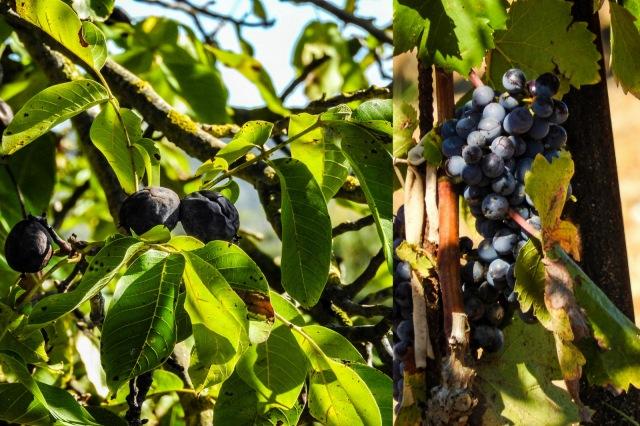 Walnuts and organic grapes